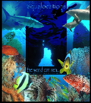 www.aqualocations.com  ~ underwater digital stock video and image library